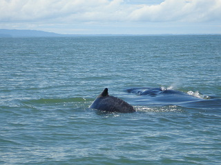 Photo of whales made during whale watching tour with Uvita