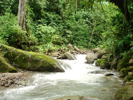 Photo of the river in the jungle of Costa Rica on the Pacific coast
