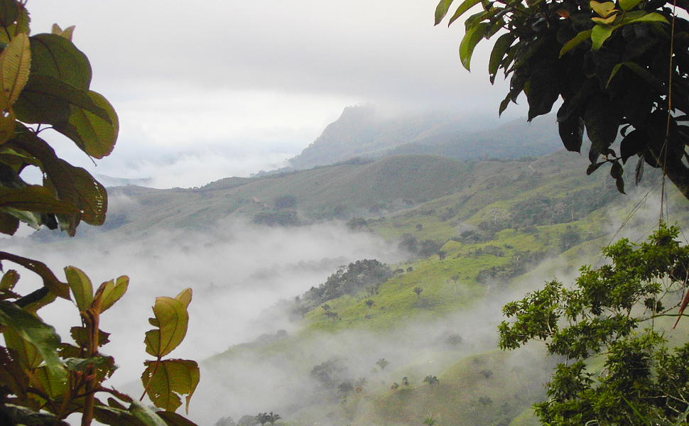 Photo of a mountainside with rainforest near Portasol
