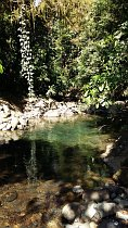 Photo of river with clear water in the jungle