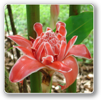 Picture of a flower in the rainforest as symbol for meditation, Qi Gong and Yoga